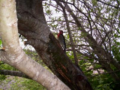 bird in tree